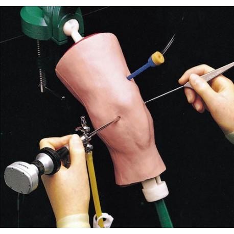 Simulateur d'arthroscopie du genou